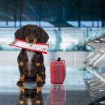 Сколько стоит перевезти собаку в самолете и как это сделать без вреда для животного?